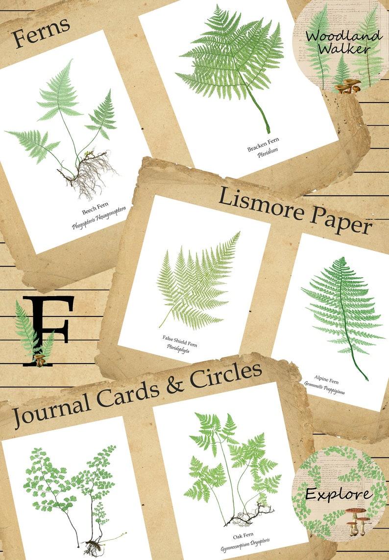 Printable Woodland Nature Walk Fern and Mushroom Journal Cards image 0