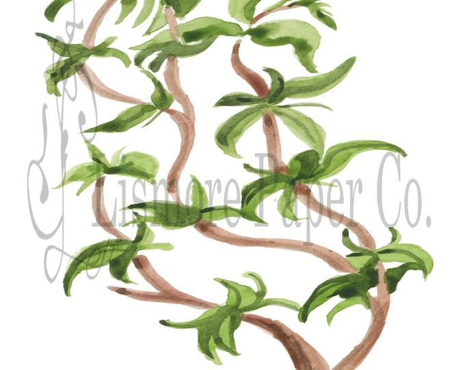 Instant Download Botanical, Oregano Herb, Printable Art, Instant Wall Art, Kitchen Art, Craft, Digital Download, Botanical Wall Art