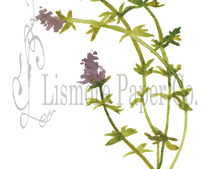 Instant Download, Botanical, Thyme, Herb, Printable Art, Instant Wall Art, Graphic, Kitchen Art, Craft, Digital Download, Botanical Wall Art