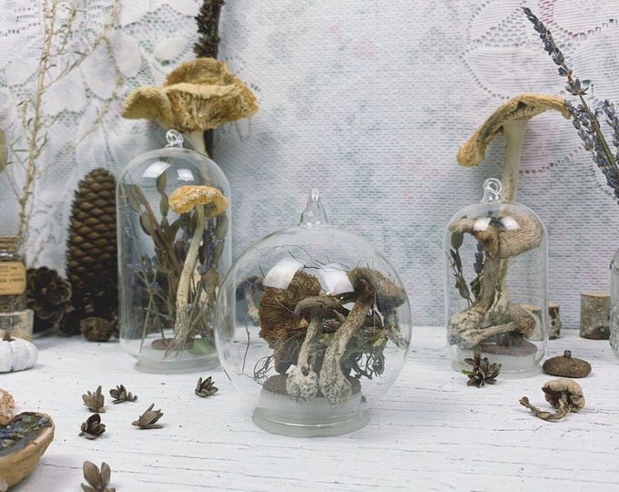 Botanical Biome set // Mushrooms III