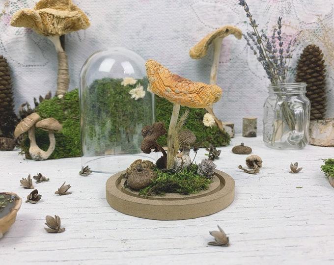 Large Botanical Biome // Mushrooms