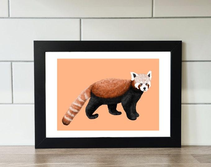 Red Panda Print, Red Panda, A6 Print, A5 Print, A4 Print, A3 Print, Wall Art, Wall Print, Illustration, Art Print by Rachel Gwen May