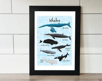 Whale Print, Whale, A6 Print, A5 Print, A4 Print, A3 Print, Wall Art, Wall Print, Illustration, Art Print by Rachel Gwen May
