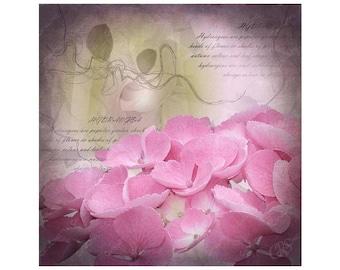Greetings Card Pink Hydrangea