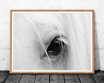 Horse Wall Art, Horse Print, Horse Art, Printable Wall Art, Digital Download Prints, Animal Wall Art, Horse Photo Print, Printable Horse