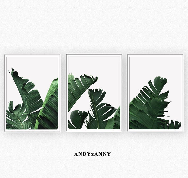 picture about Printable Sets identify Mounted of 3 Banana Leaf Prints, Electronic Obtain Print, Tropical Print Mounted, Printable Sets, Mounted of 3 Print, Succulent Print, Fastened of 3 Wall Artwork