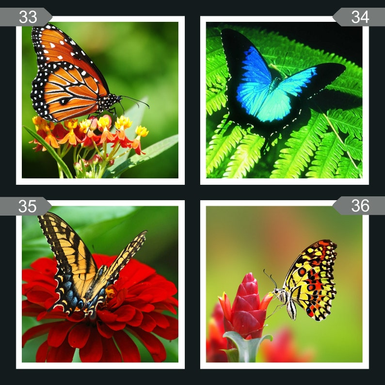 Ceramic Butterfly Coasters image 0