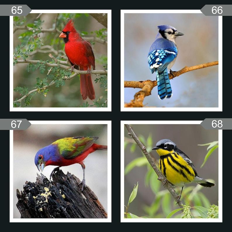 Ceramic Tile Bird Coasters image 0