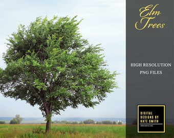 Elm Tree Overlays, Separate PNG Files, High Resolution, Instant Download, CUOK.