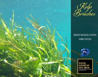 12 High Resolution Kelp Brushes for Photoshop, 300ppi Instant Download, CUOK.