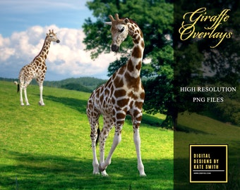 14 Giraffe Overlays, Separate PNG Files, High Resolution, Instant Download.