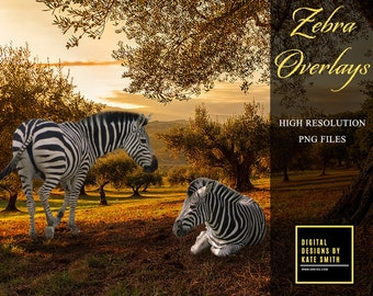 Zebra Overlays, Separate PNG Files, High Resolution, Instant Download, Buy 3 get 1 free, CUOK.