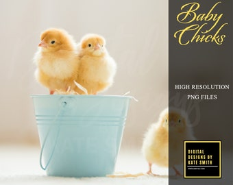 Baby Chicks Transparent Overlays, High Resolution, Instant Download.