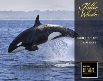 Killer Whale Overlays, Separate Png Files, High Resolution, Instant Download, Buy 3 get 1 free, CUOK.
