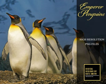 Emperor Penguin Overlays, Separate PNG Files, High Resolution, Instant Download, CUOK.