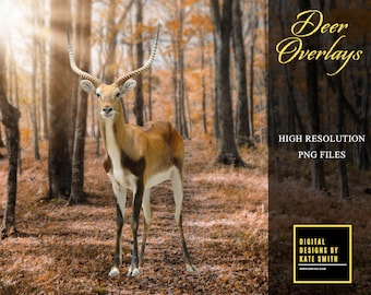 Deer Overlays, High Resolution, Separate PNG Files, Instant Download, CUOK.