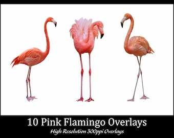 Pink Flamingo Overlays, Separate Png Files with Transparent Backing, High Resolution, Instant Download.