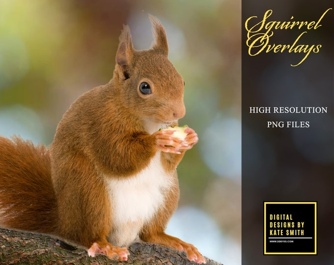 Buy 3 get one free. Pack of 15 Red Squirrel Overlays, Separate PNG's With Transparent Backing, Instant Download.