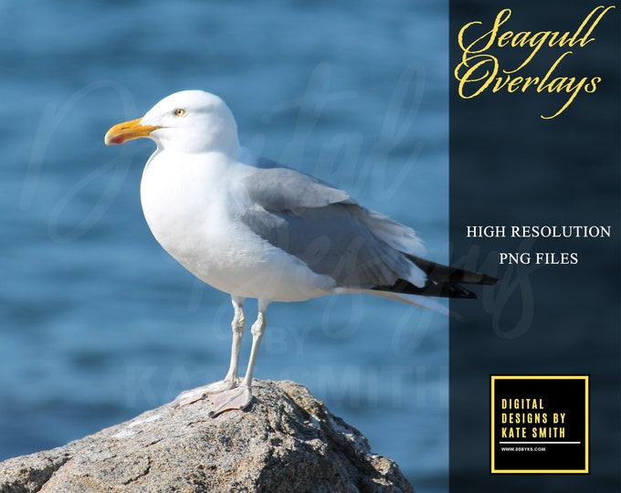 Seagull Overlays, Separate PNG Files with Transparent Backing, High Resolution, Instant Download.