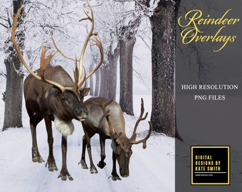 Christmas Reindeer Overlays, Separate PNG Files, High Resolution, Instant Download, CUOK.
