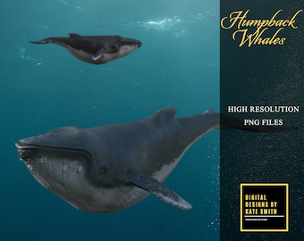 Humpback Whale Overlays, Separate PNG Files, High Resolution, Instant Download, CUOK.