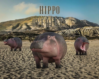 15 Hippo Overlays, Separate PNG Files, High Resolution, Instant Download.