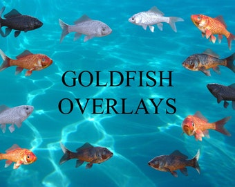 16 Goldfish Overlays, Separate PNG Files, High Resolution, Instant Download, Buy 3 get 1 free, CUOK.