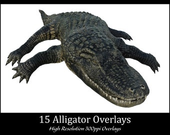 15 Alligator Overlays, High Resolution 300ppi, Separate PNG Files with Transparent Backing, Instant Download, CUOK.