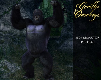 Gorilla Overlays, Separate PNG Files, High Resolution, Instant Download, CUOK, Buy 3 get 1 free.