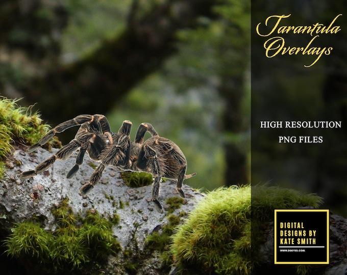 Tarantula Spider Transparent Overlays, High Resolution, Instant Download, CUOK.