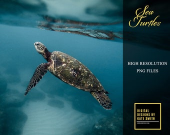 10 Sea Turtle Overlays, Separate PNG Files, High Resolution 300ppi, Instant Download.