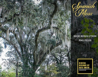 Spanish Moss Overlays, Separate PNG Files, High Resolution, Instant Download, CUOK.