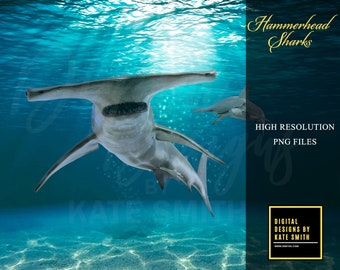 Hammerhead Sharks Overlays, Separate PNG Files, High Resolution, Instant Download, CUOK.