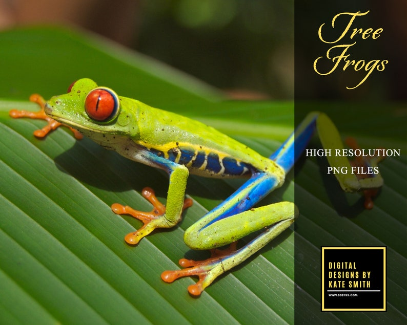 25 Tree Frog Overlays Separate PNG Files High Resolution image 0