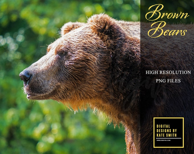 Brown Bear Overlays, High Resolution, Separate PNG's, Instant Download. Buy 3 get one free.