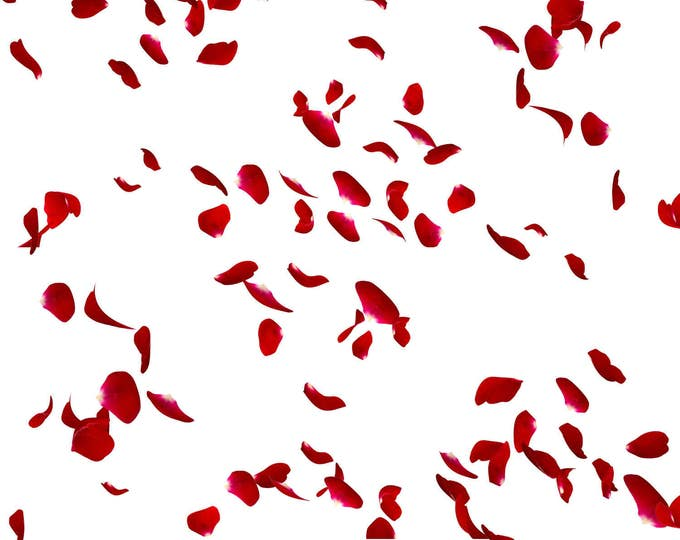 Buy 3 get one free. 6 x Falling Rose Petal Overlays, Separate Png Files, High Resolution, Instant Download.