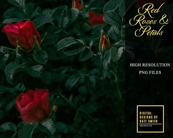 Red Roses and Petal Overlays, Separate PNG Files, High Resolution, Instant Download, CUOK.