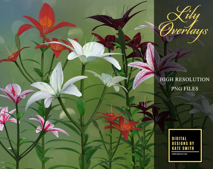 Lily Flower Overlays, Separate PNG Files, High Resolution, Instant Download. CUOK.