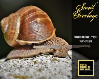 15 Snail & Snail Shell Overlays, High Resolution, Separate Png Files, Instant Download, CUOK. Buy 3 get 1 free.