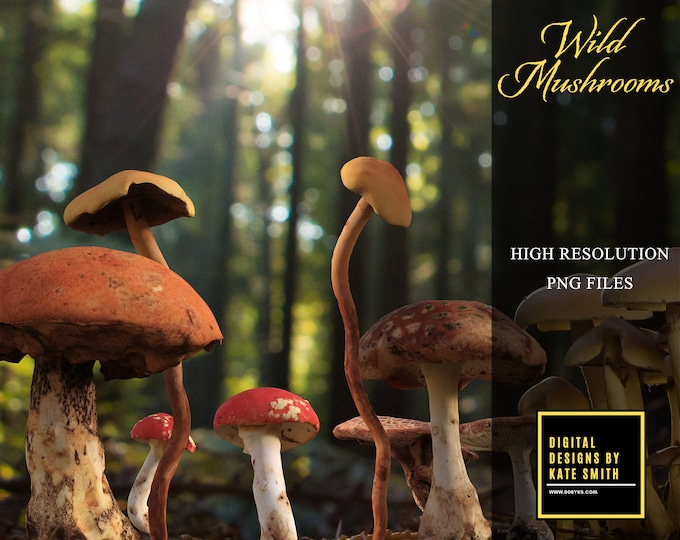 Wild Mushroom Overlays, Separate PNG Files, High Resolution, Instant Download, CUOK.