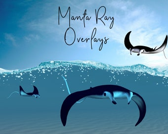 Manta Ray Overlays, Separate PNG Files, High Resolution, Instant Download.