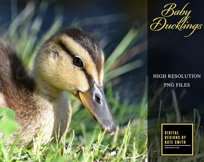 Buy 3 get one free. Baby Duckling Overlays, Seperate Png Files with Transparent Backing, 300ppi, Instant Download.