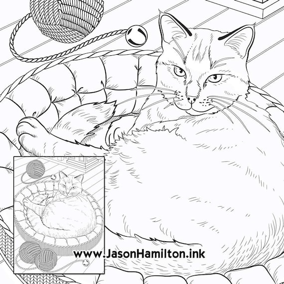 Cat Bed coloring page (PDF instant download, Coloring Pages, Adult Coloring  Pages, Coloring Books for Adults)