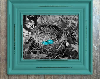 Farmhouse Decor, Robins Eggs, Black And White, Eggs, Blue, Modern Nature Print, Nature Design, Cottage Decor, Bird Nest Photo