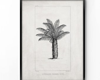 botanical wall art, printable art, wall decor, office decor, home decor, graphic art, art print, vintage botanical, instant download, palm