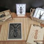 Loose Parts Insect/Bug Exploration, Build a Bug, Fine Motor Skills, Gift for Kids, Montessori Classroom, Reggio Emilia, Teacher Resources