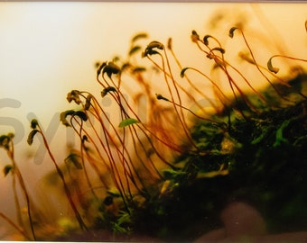 Moss Sprouts - Matted Print