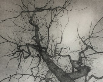 Tree print, giclee print original drypoint engraving, drawing