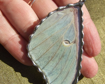 Luna Moth Pendant - Large Real Luna Moth Wing in Glass