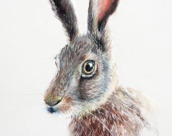 Hares n Bunnies Wall Art